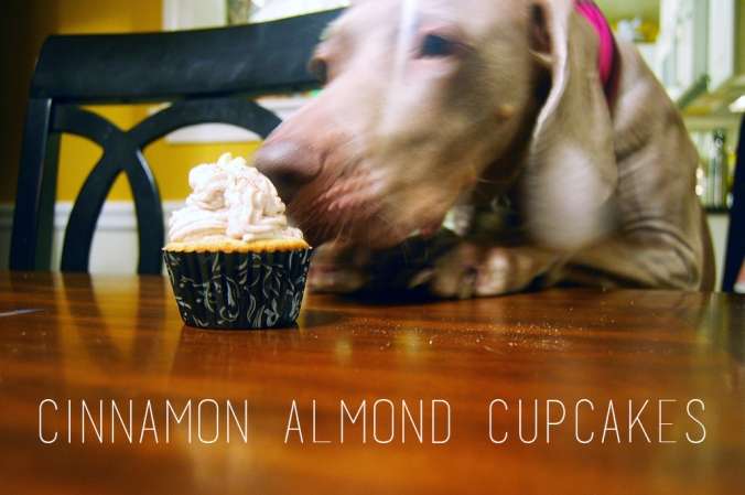 cupcakes and cod 087 copy texxt
