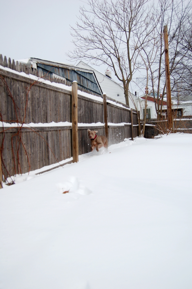 snowday 2015 144